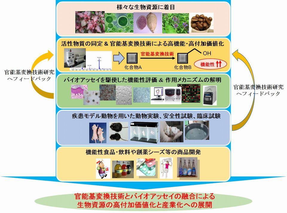 tsukuba_cross_fig3